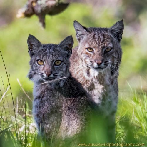 Aussie Wild Photography