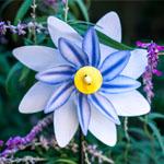 Floral Pinwheels