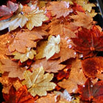 Gold and Copper Dipped Leaves by Goddess